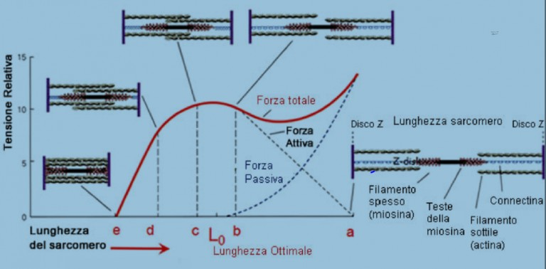La forza nel Functional Range Conditioning 002 spine center